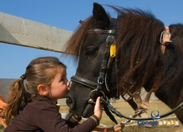 $25 for 90-Minute Guided Horseback Ride @ Rocking K Horse