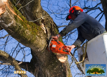 Tree Trimming! 3-Man Crew for Two hours of Tree Trimming Including Removal for $249 by Gonzalez Landscaping & Tree Service (Value $500-600)