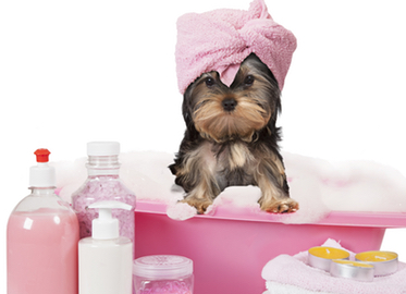 Puppies and Paws Grooming in Westlake. NEW Dog and Cat Grooming Spa Rated 5-Stars on Yelp!