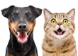 Dog and Cat Dental Cleaning Including Anesthesia and Pre-Anesthetic Blood Work at Townsgate Pet Hospital Just $199 (Value $499)